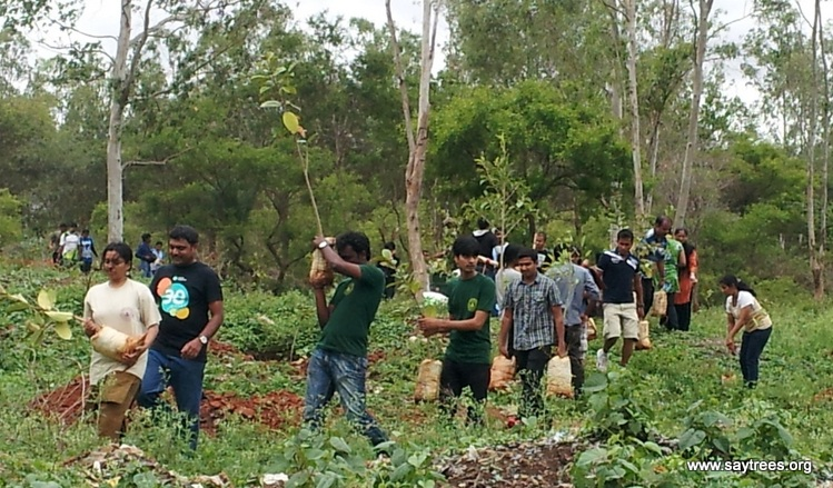 Tree-Plantation-Bangalore-11