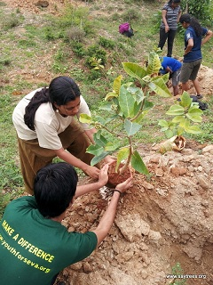 Tree-Plantation-Bangalore-6