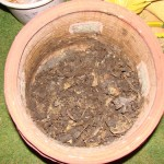 Start making organic compost at home